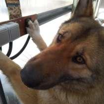 Очаровательная и умная собака ищет добродушных хозяев, в Пензе