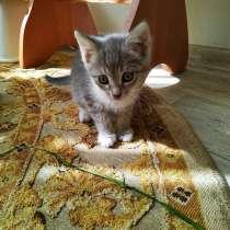 Кошечка в добрые руки, в Самаре