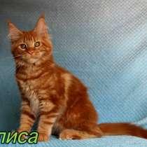 Кошки Мейн-Кун, в г.Таллин