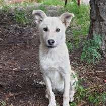 Собачка ищет любящий дом!, в г.Алматы
