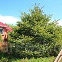 Саженцы более 25 уникальных растений Приморского края, в Находке