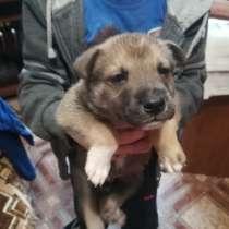 Даром щенок 200р, в Нижнем Новгороде