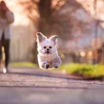 Выгул собак, в Санкт-Петербурге