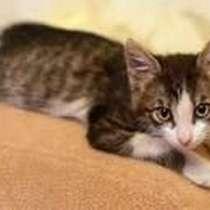 Котик Бимка: симпатичный, с хорошим аппетитом, дружелюбный, в г.Хмельницкий