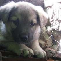 Для тех кто любит собак!, в Богородске