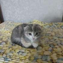 Котята, в Чебоксарах