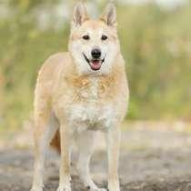Приютская собачка Сима ищет новый дом, в Москве