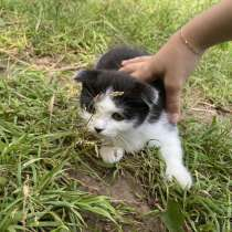 Котята в добрые руки, в Кстове