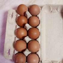 Яйцо куриное домашнее, в Новомосковске