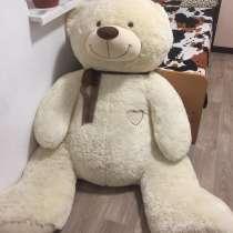 Медведь большой, в Анапе