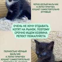 Котята ищут хозяина, в Иркутске
