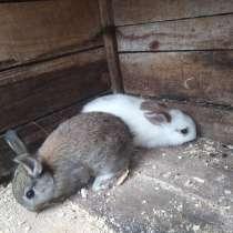 Кролики декоративные, в Кулебаках