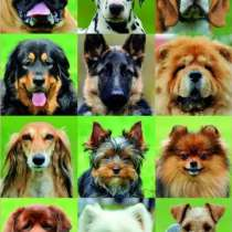 Куплю, Возьму собаку маленькой или средней породы (щенка), в Екатеринбурге