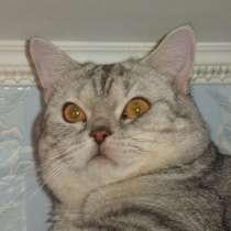Котик приглащает на вязку, в г.Алматы