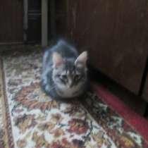 Котята домашние в ответственные руки, в Москве