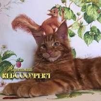 Котята мейн кун красный солид. Шоу класс, в Краснодаре
