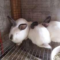 Кролики, в Красноярске