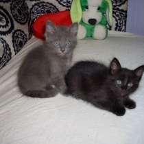 Коты 1.5мес, в Мичуринске