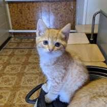 Красивые домашние котята в добрые руки, в Анне