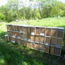 Пчелопакеты на весну 2018 года с доставкой, в г.Токмак