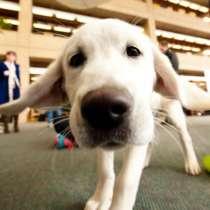 Mirdog - Кинологический центр дрессировки собак. Москва, в Москве