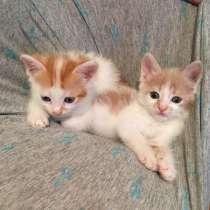 Отдам котята до 1,5 месяцев, в Ростове-на-Дону