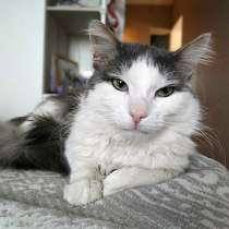 Забытый на даче зеленоглазый ласковый котик Томми ищет дом, в Москве