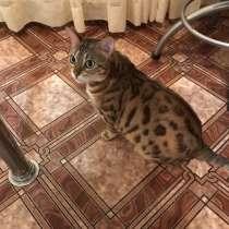 Продаётся Бенгальская Кошка, в Красноярске