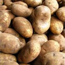 Картофель, в Новосибирске