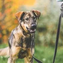 Ищет дом красивая, статная щенок-подросток Малинка, в Москве