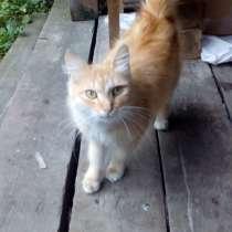 2 котенка и кошка, в Томске