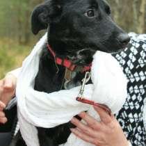 Красивая собака в ответственные руки, в Электрогорске