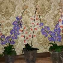Орхидеи из холодного фарфора, в г.Харьков