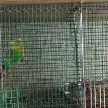 Вольеры для птиц, в г.Витебск