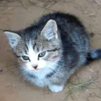 Котики ищут дом, в г.Минск