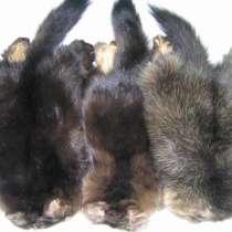 Куплю мех соболя, белки, ондатры, в Красноярске