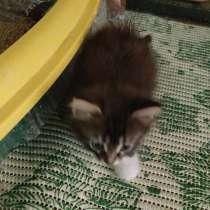 Котёнок в добрые руки, в Бору