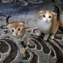 Животные, котята, в г.Харьков