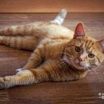 Ласковое солнышко Марсель, молодой домашний котик, в Москве