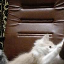 Котята, в Жуковском