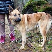 Умнейший пёс с тигриными полосками ищет дом, в Санкт-Петербурге