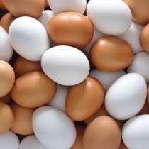Куриное яйцо C1, в г.Витебск