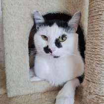 Красивый котик Мурзик в добрые руки, в г.Минск