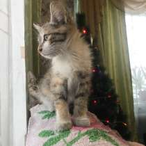 Котёнок девочка тулун!!, в Иркутске