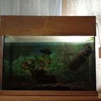 Продаётся аквариум, в Михайловке