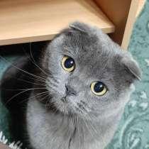 Пропала кошка!, в Елизово