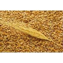 Экспорт зерновых в страны Персидского залива и Африку, в г.Алматы