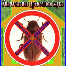 Как избавиться от древесного жука короеда услуги в Алматы, в г.Алматы