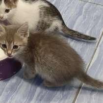 Котята в добрые руки БЕСПЛАТНО, в Ишимбае