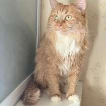 Рыжуля – кошка сложной судьбы. В поисках дома!, в Москве